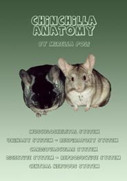 Chinchilla Anatomy