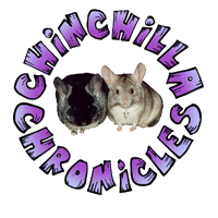 Chinchilla Chronicles - Home to Chinchilla Care and Education.